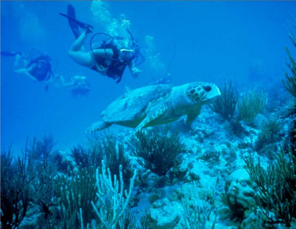 Scuba Diving Vacation Packages And More